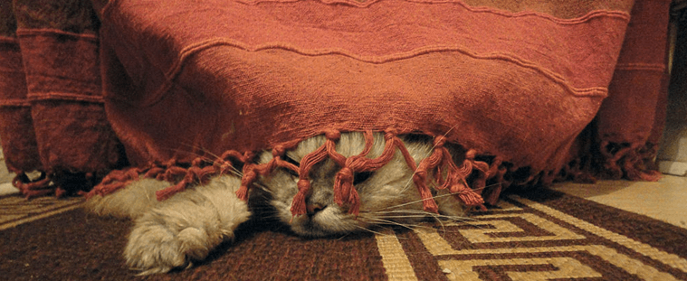 cat hidding under a cloth with tassles