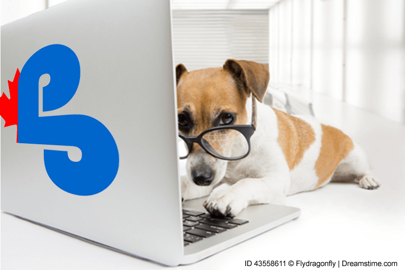 dog wearing glasses appears to be working on a laptop computer